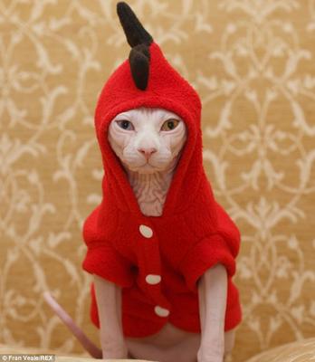 CatsMeow X.