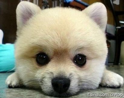 Fuzzy B.